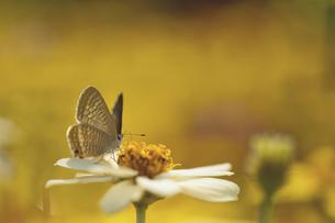 花の国の虫たち14の素材 [FYI00224101]