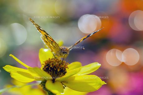 花の国の虫たち6の素材 [FYI00224109]