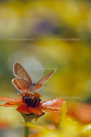 花の国の虫たち15の写真素材 [FYI00224114]