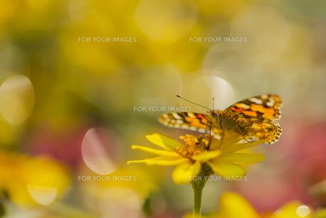 花の国の虫たち5の素材 [FYI00224120]