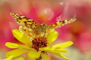 花の国の虫たち2の素材 [FYI00224121]