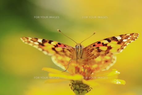 花の国の虫たち1の素材 [FYI00224123]
