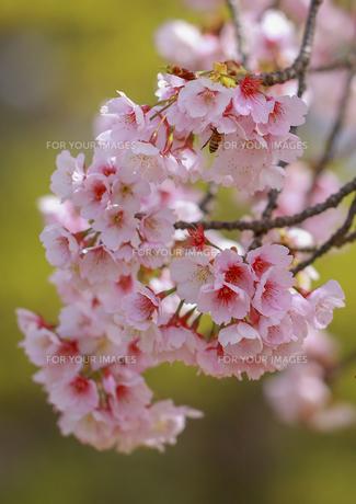 花盛りの素材 [FYI00224168]
