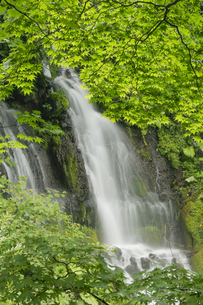 青葉の中の滝の素材 [FYI00224268]