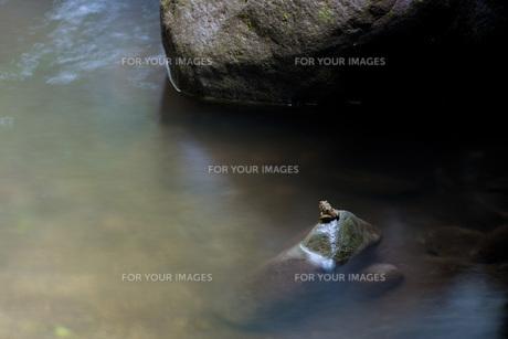 岩の上に蛙の写真素材 [FYI00224294]