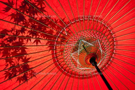蛇の目傘にうつる紅葉の素材 [FYI00224354]