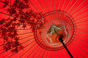 蛇の目傘にうつる紅葉の写真素材 [FYI00224354]