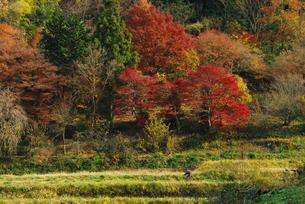 秋のサイクリングの写真素材 [FYI00224577]