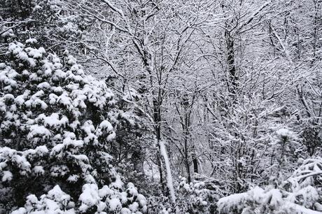 積雪の林の素材 [FYI00224584]