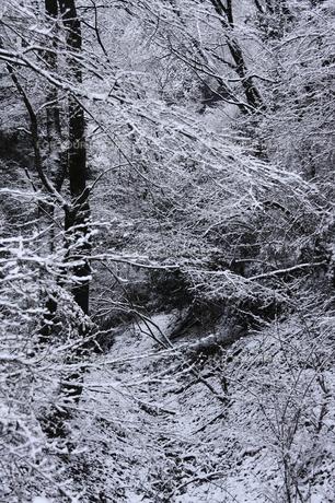 積雪の林の素材 [FYI00224585]