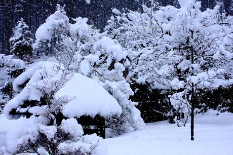 雪化粧の素材 [FYI00224616]