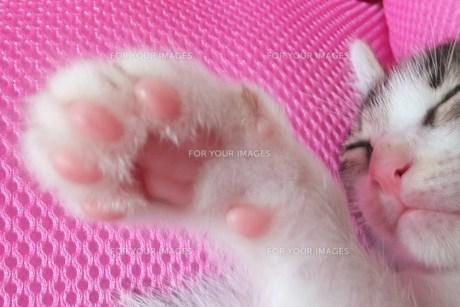 子猫の肉球の写真素材 [FYI00225653]