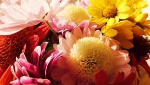 鮮やかな花色の写真素材 [FYI00225695]