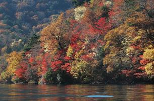 中禅寺湖畔「八丁出島」の紅葉の写真素材 [FYI00225721]