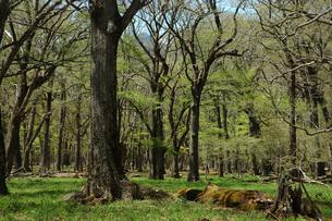 2.千手ヶ浜近くの巨木の森の写真素材 [FYI00225726]