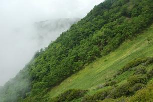 16. 赤薙山の新緑の写真素材 [FYI00225733]