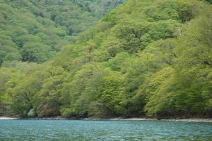 39. 中禅寺湖北岸の新緑の写真素材 [FYI00225755]