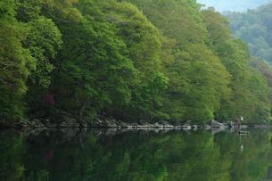 31. 湖畔の新緑の写真素材 [FYI00225768]
