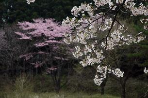 34. 小百桜川公園の写真素材 [FYI00225770]