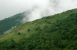 71. 赤薙山登山道とトンボの写真素材 [FYI00225793]
