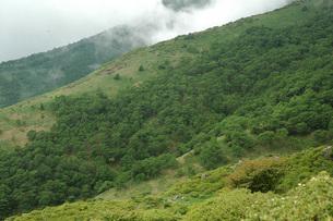 72.  赤薙山登山道の写真素材 [FYI00225802]
