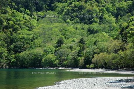 82. 千手ヶ浜の新緑の写真素材 [FYI00225812]