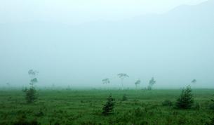 114. 朝靄の戦場ヶ原の写真素材 [FYI00225841]