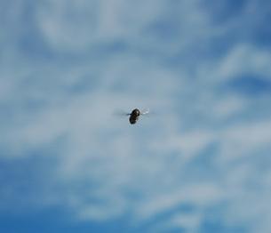 137. ミツバチの素材 [FYI00225854]