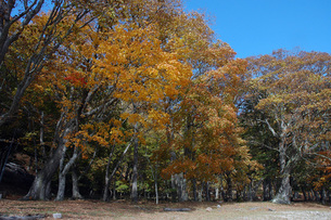 173. ハルニレの大木の写真素材 [FYI00225885]