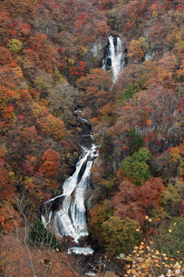 224. 霧降の滝 ①の写真素材 [FYI00225933]