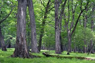290. 千手の森 ①の写真素材 [FYI00225996]