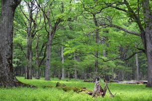 291. 千手の森 ②の写真素材 [FYI00226005]