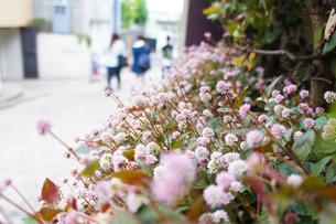 花と道の素材 [FYI00226084]