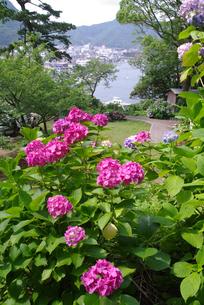 下田公園の紫陽花の素材 [FYI00226091]
