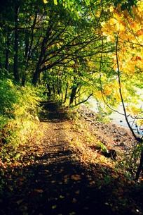 湖畔の散歩道の写真素材 [FYI00226145]