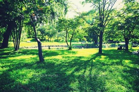 新緑の中島公園の素材 [FYI00226148]