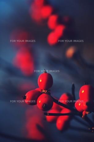 赤い実の素材 [FYI00226149]