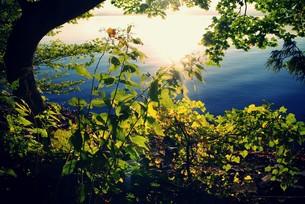 十和田湖畔の写真素材 [FYI00226153]