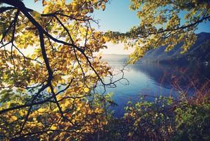 十和田湖畔の紅葉の写真素材 [FYI00226154]