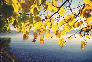 十和田湖畔の紅葉の写真素材 [FYI00226157]