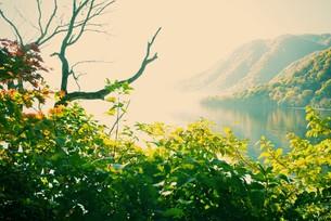 十和田湖畔の紅葉の写真素材 [FYI00226173]