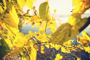 湖畔の黄葉の写真素材 [FYI00226176]
