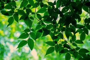 新緑の素材 [FYI00226177]