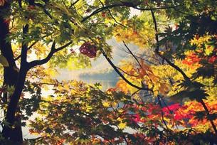 紅葉と湖の写真素材 [FYI00226178]