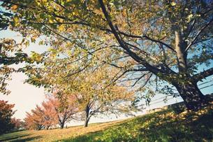荒川桜堤の秋の素材 [FYI00226182]