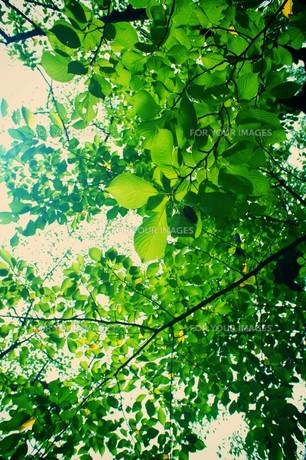 新緑の素材 [FYI00226192]
