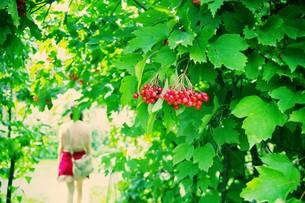 赤い実とグリーンの素材 [FYI00226199]