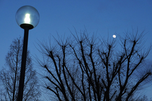 街灯と冬の木の素材 [FYI00226207]