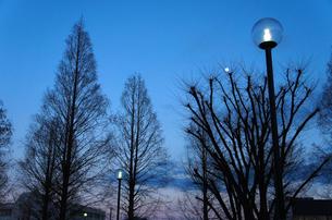 冬の公園の素材 [FYI00226215]