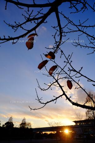 舎人公園夕景の素材 [FYI00226218]